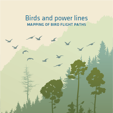 Birds and power lines. Mapping of bird flight paths.