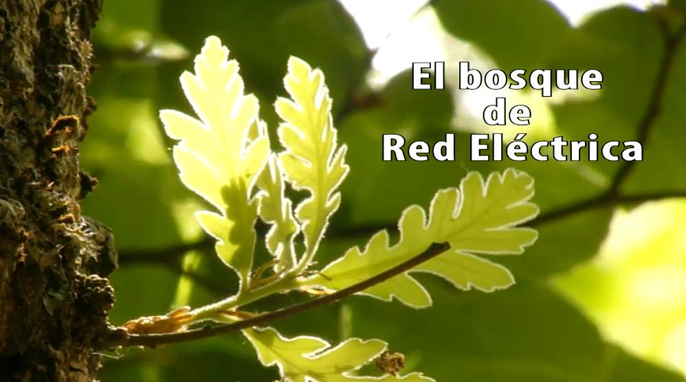 Video: El bosque de Red Eléctrica.