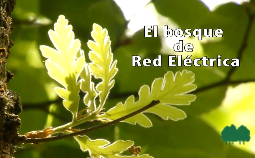 El bosque de Red Eléctrica.