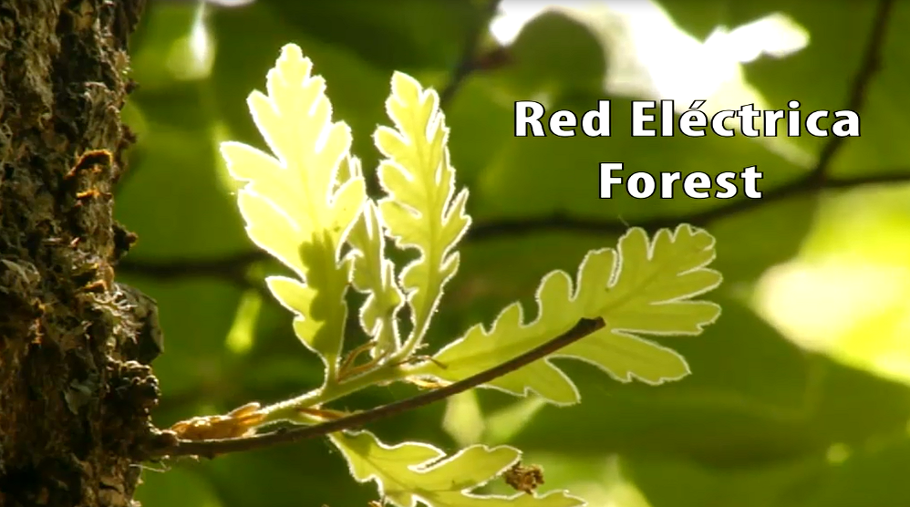 Video: Red Eléctrica Forest.