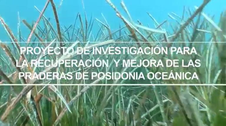 Ir a la página de Posidonia oceanica