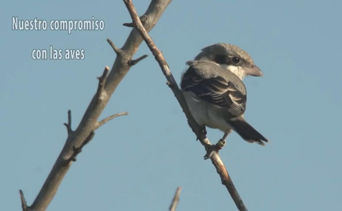 Portada video 'buestro compromiso con las aves'.