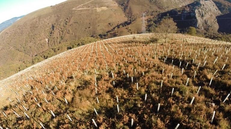 Bosque del Robledal de Remendón (Vizcaya).
