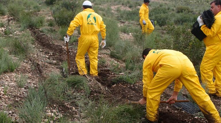 Trabajos de plantación del proyecto de reforestación de la sierra del Molino