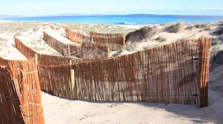 Recuperación de zona blowout (antropicamente pérdida de la arena).