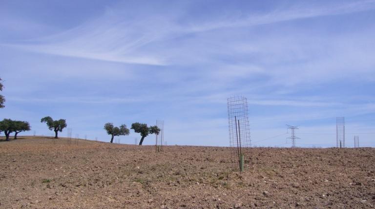 Protectores metálicos que preservan las nuevas plantaciones de posibles impactos del ganado.