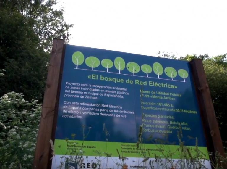 El bosque de Red Eléctrica