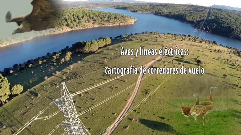 Aves y líneas eléctricas: cartografía de corredores de vuelo