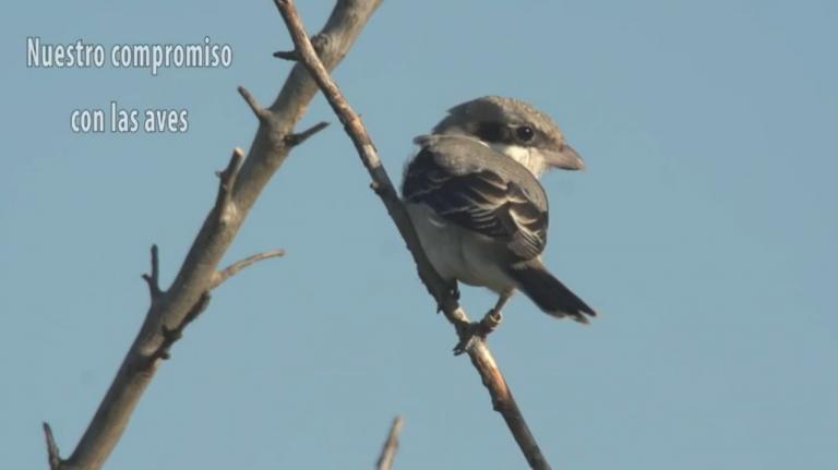 Video 'Nuestro compromiso con las aves'.