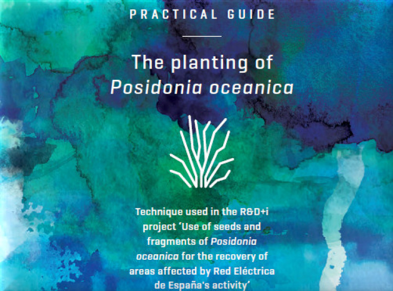 Practical Guide: The Planting of Posidonia oceanica