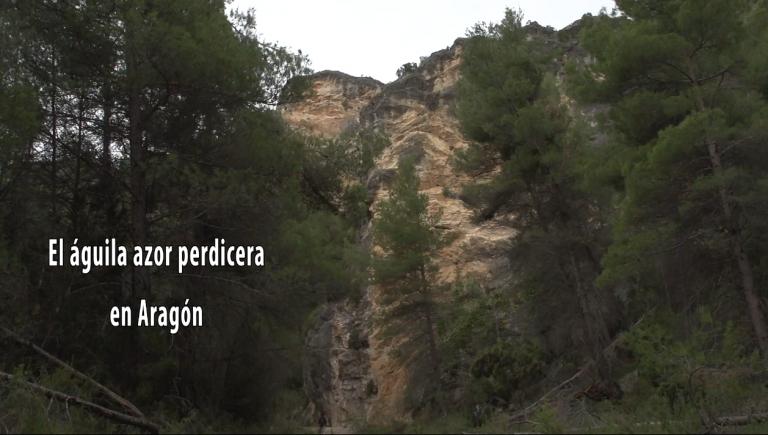 """Video """"Recuperación del águila-azor perdicera en Aragón"""""""