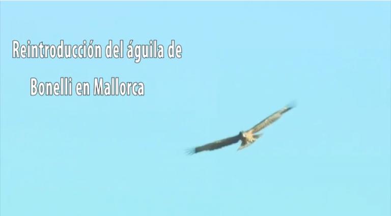 """Video """"Reintroducción del águila de Bonelli en Mallorca"""""""